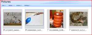 Thumbnails in a Picture Library